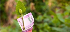 image-of-plant-and-currency-on-concept-on-economy-growth